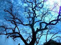 Amir Tree Services, Certified Arborist, Insured, WSIB, Lower pri