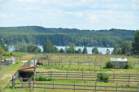 106 ac horse farm lake view 50 stalls indoor arena 50 ac forest