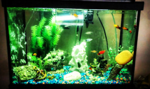 30 gal tank with stand