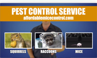 Affordable Wildlife Removal & Mice Control
