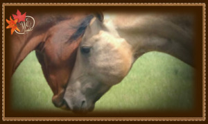Herd Sire - Buckskin Hollywood Dun It