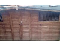 16ftx8ft shed/pigeon loft