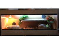 3ft wide Vivarium with built in UV lamp, heat lamp and heat mat. Shelf, wooden accessories & plants.