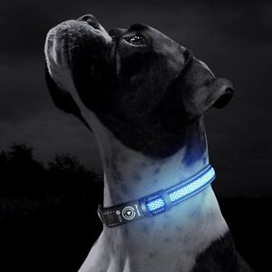 USB Rechargeable LED Dog Collar Adelaide CBD Adelaide City Preview