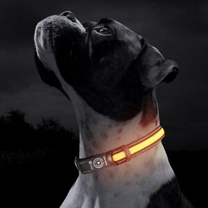 Smart USB LED Dog Collar Adelaide CBD Adelaide City Preview