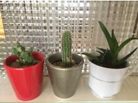 Plants and pots for Home or office