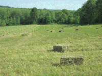 30 Bales - Horse Quality Hay - Orchard Grass x Timothy Mix