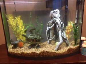 38 gallon fish tank and everything