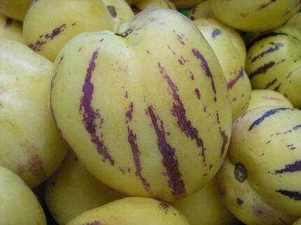 Pepino – Mexican Melon Pear Edible Fruit Tree Shrub Perennial
