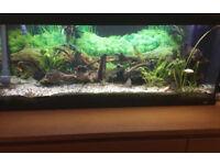 Juwel Fishtank 150l