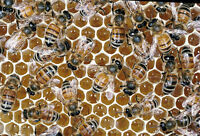 Hobby honey bee beekeeping 2016 waiting list