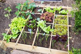 Organic Vegetables 🌱