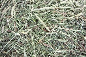 In need of Timothy hay for bunnies!!