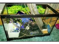 Fishtank full set up