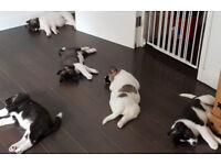 Akita Puppies Akita Pups We Have Welcomed Litter O