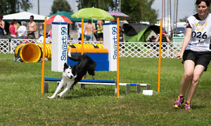 Introduction to Agility Classes