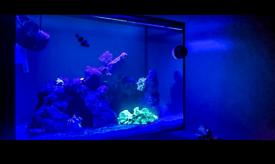 Fluval evo marine fish tank