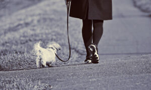 $20 Tail Wagging Dog Walker & Pet Care Clearview & Area