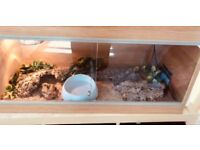OAK VENEER VIVARIUM WITH BARK, HIDES, LAMP AS SEEN
