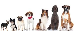 LOOKING TO ADOPT ANY SMALL DOG BREED