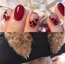 Gel nails & Dog nails
