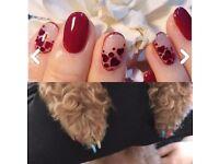 Gel nails & Dog nails