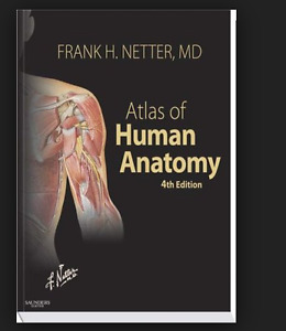 Anatomy Textbook / Human Physiology
