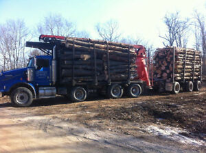 Log lengths: Firewood for sale Kingston Kingston Area image 2