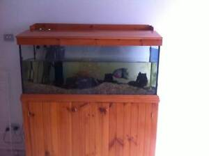 4 Foot Fish Tank - Tropical -  Filter, Heater and Fish Maitland Maitland Area Preview
