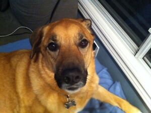 Pet Care/Extended Stays-London/St Thomas/Strathroy/Mt Brydges