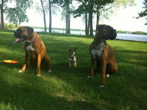 3C DOG OBEDIENCE & BEHAVIOURAL TRAINING West Island Greater Montréal image 5