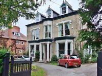 Spacious house share Newland park near University and avenues