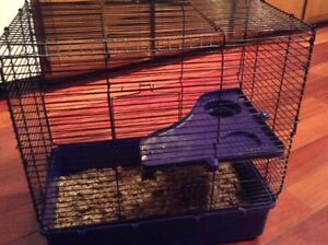 Hamster and Accessories for Sale
