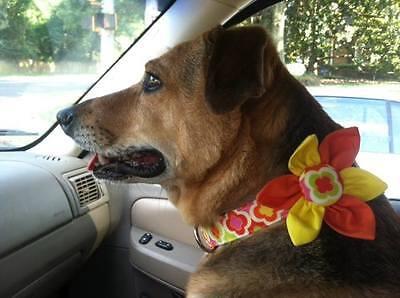 Red White /& Blue DIGITAL Camo Terri/'s Dog Collar Custom made Adjustable USA