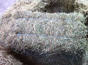 2nd and 3rd Cut Hay