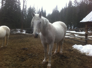 Beautiful Horses for Sale