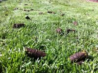 LAWN AERATION IN YOUR AREA