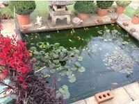 Free goldfish for caring adoptive parents