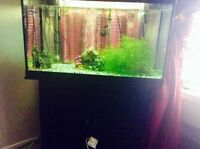 40g live plants fish tank with fishes and all accessories