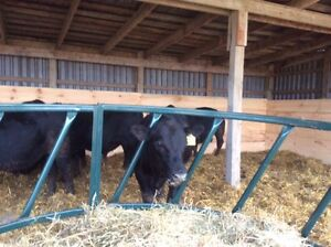 Grass feed Black Angus Beef