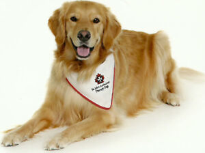 Therapy dog program- I'd like to take your dog
