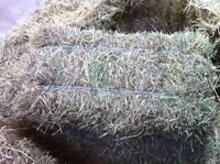 Excellent quality hay