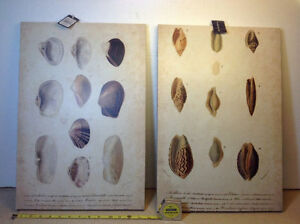 "2 NEW with tags shell prints on canvas - 13.5"" x 20"" Cambridge Kitchener Area image 1"