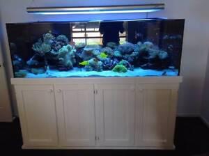 Stunning 6ft Salt water Aquarium with High Gloss White Cabinet Aldinga Beach Morphett Vale Area Preview
