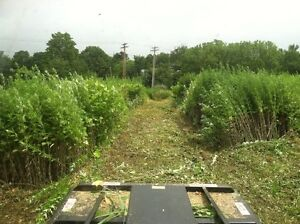 Brush & Field Mowing Also Atv Trails