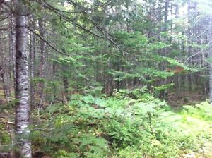 59 Wooded Acres near St Stephen NB
