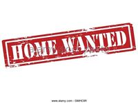 minimum 2 bed house/flat wanted carmarthen, st clears or laugharne area