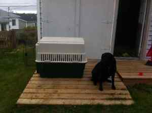 Dog Crate St. John's Newfoundland image 2