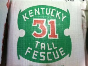 Kentucky 31 Tall Fescue Grass Seed K 31 5  lbs 98% Pure