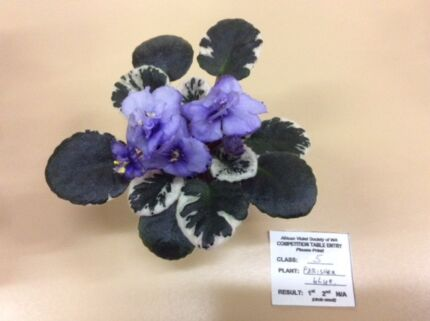 African Violets and Gesneraids Meeting and Sales in Manning